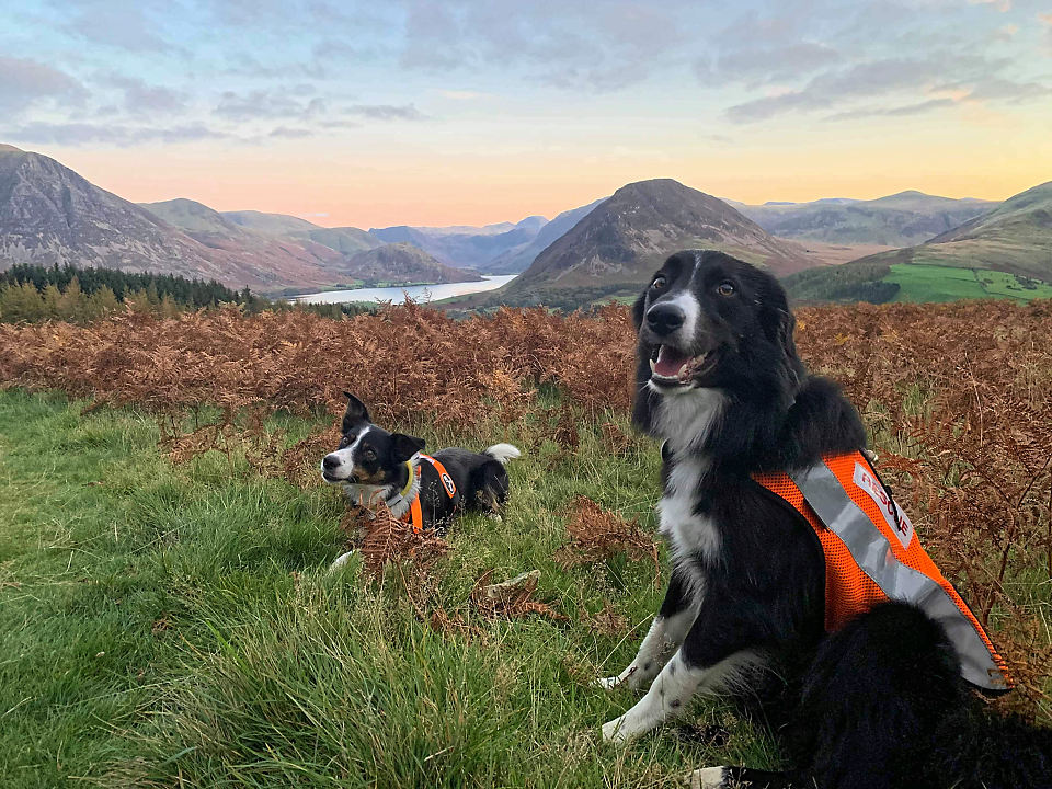 Team search dogs on Low Fell